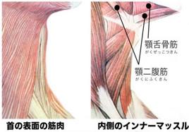 首の筋肉 図解
